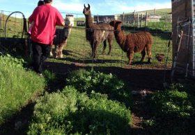 Hillside Spirit Farm