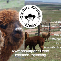 Big Horn Mountain Alpacas