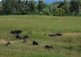 Shiloh Valley Family Farm
